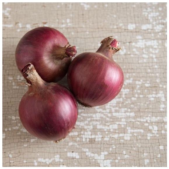 Onion - Redwing