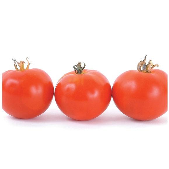 Tomato - Oregon Spring