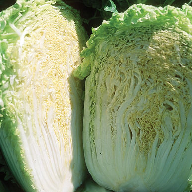 Chou_chinese cabbage minuet