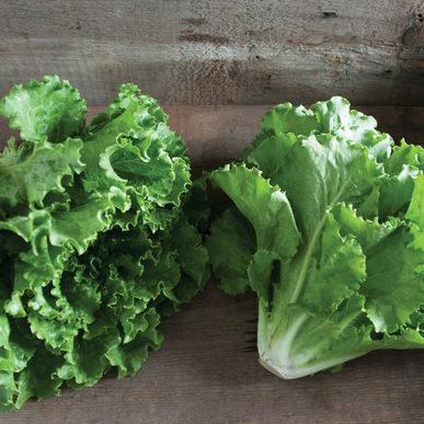 Lettuce_Romaine_fusion