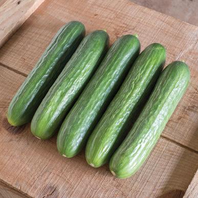 concombre_cucumber katrina